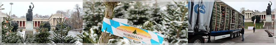 christbaumdealer